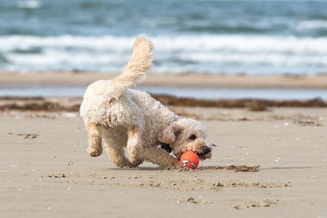 Šťastný pes u moře